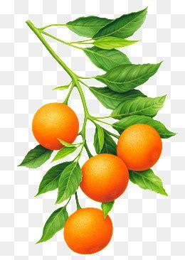 Orange Desserts at Get Orange Recipes